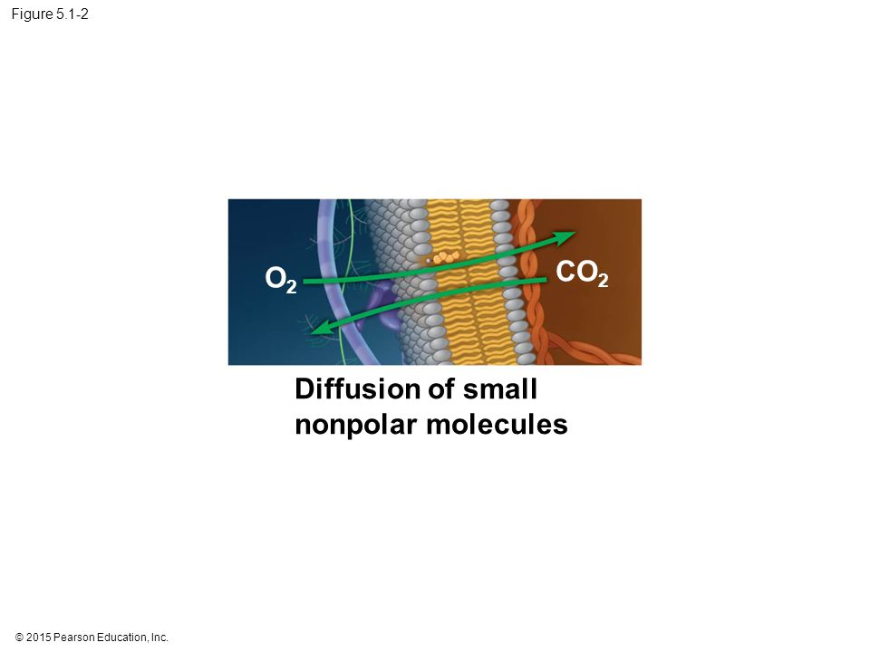 Figure 5.3a Molecules of dye Pores Membrane Net diffusion Equilibrium