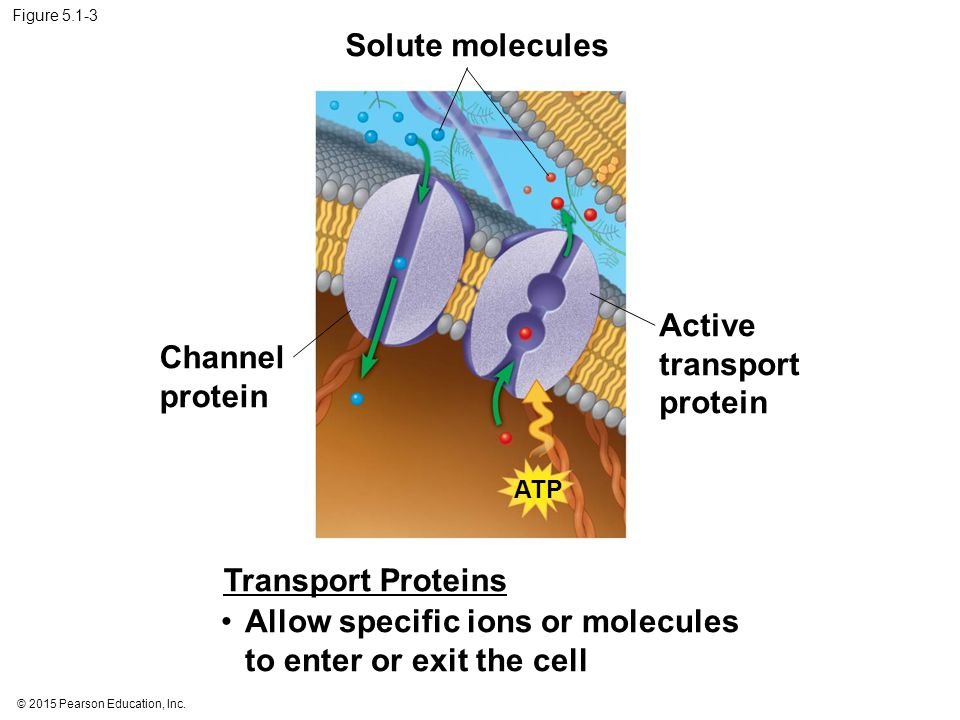 Enzymes speed up the cell's chemical reactions by lowering energy barriers Although biological molecules possess much potential energy, it is not released spontaneously.