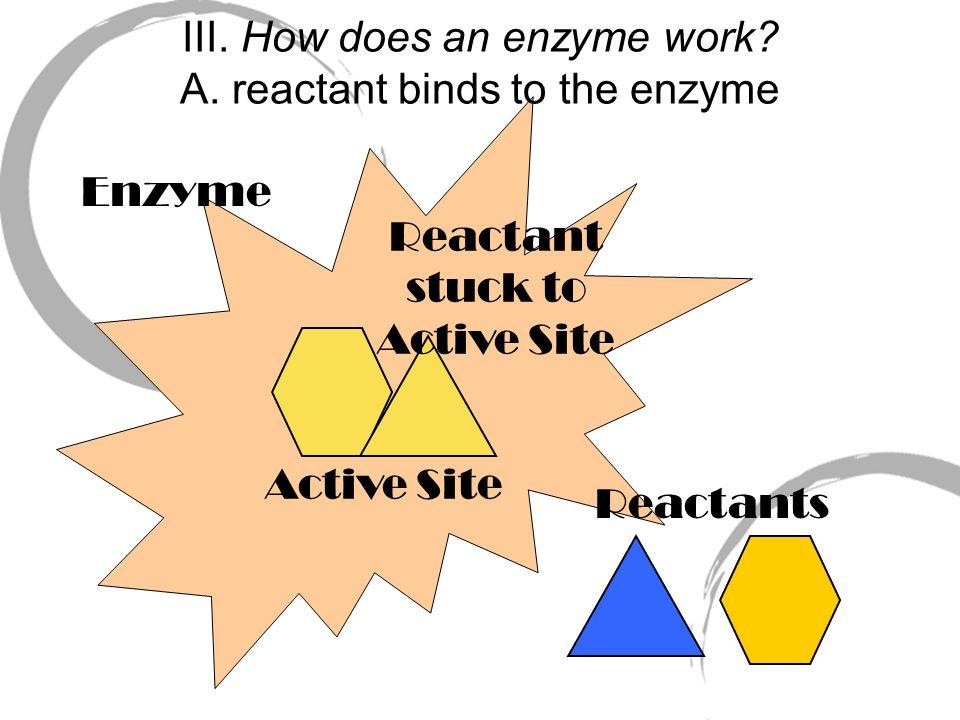Labeled diagram: Enzyme Active Site Reactants