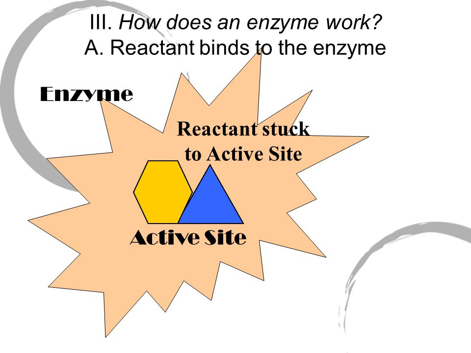 Enzyme Active Site Reactants III. How does an enzyme work.