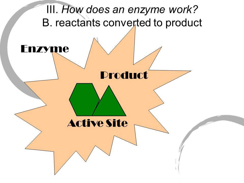 Enzyme Active Site III. How does an enzyme work. A.