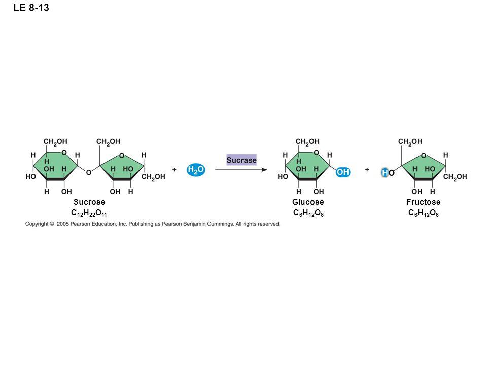 LE 8-13 Sucrose C 12 H 22 O 11 Glucose C 6 H 12 O 6 Fructose C 6 H 12 O 6