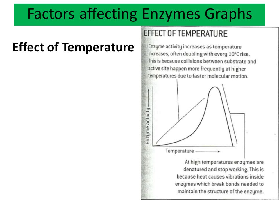 Factors affecting Enzymes Graphs Effect of Temperature
