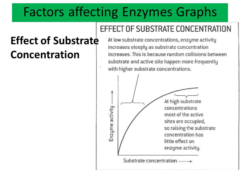 Factors affecting Enzymes Graphs Effect of Substrate Concentration