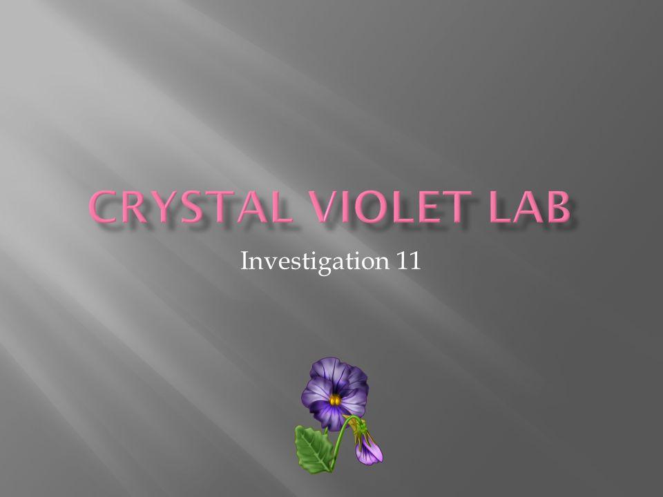 Investigation 11