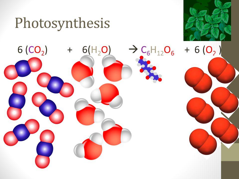 Photosynthesis 6 (CO 2 ) + 6(H 2 O)  C 6 H 12 O 6 + 6 (O 2 )
