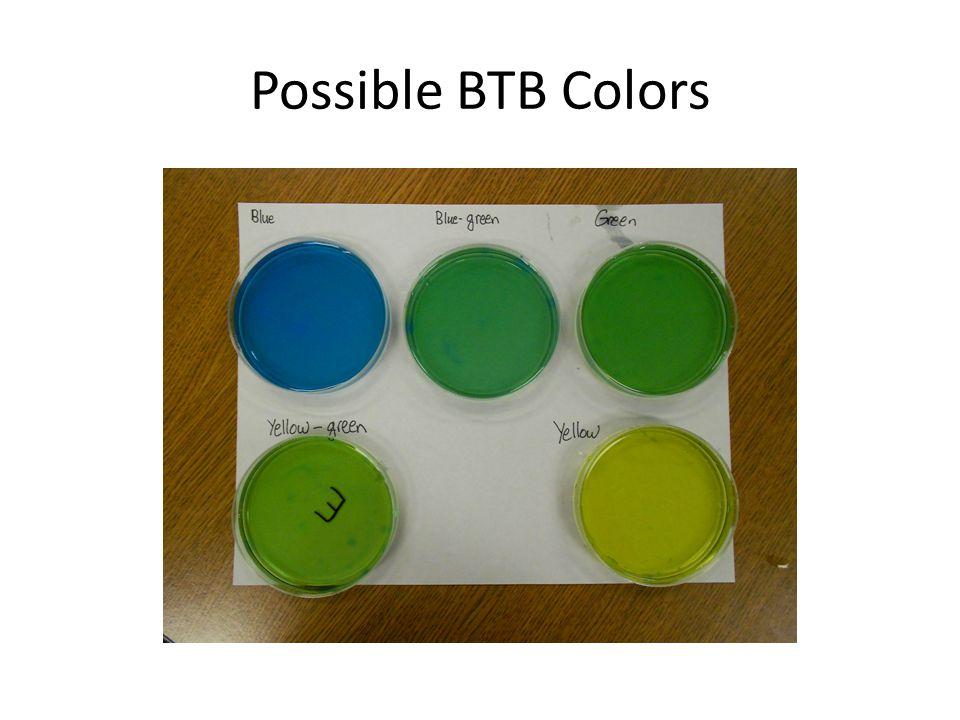 Possible BTB Colors