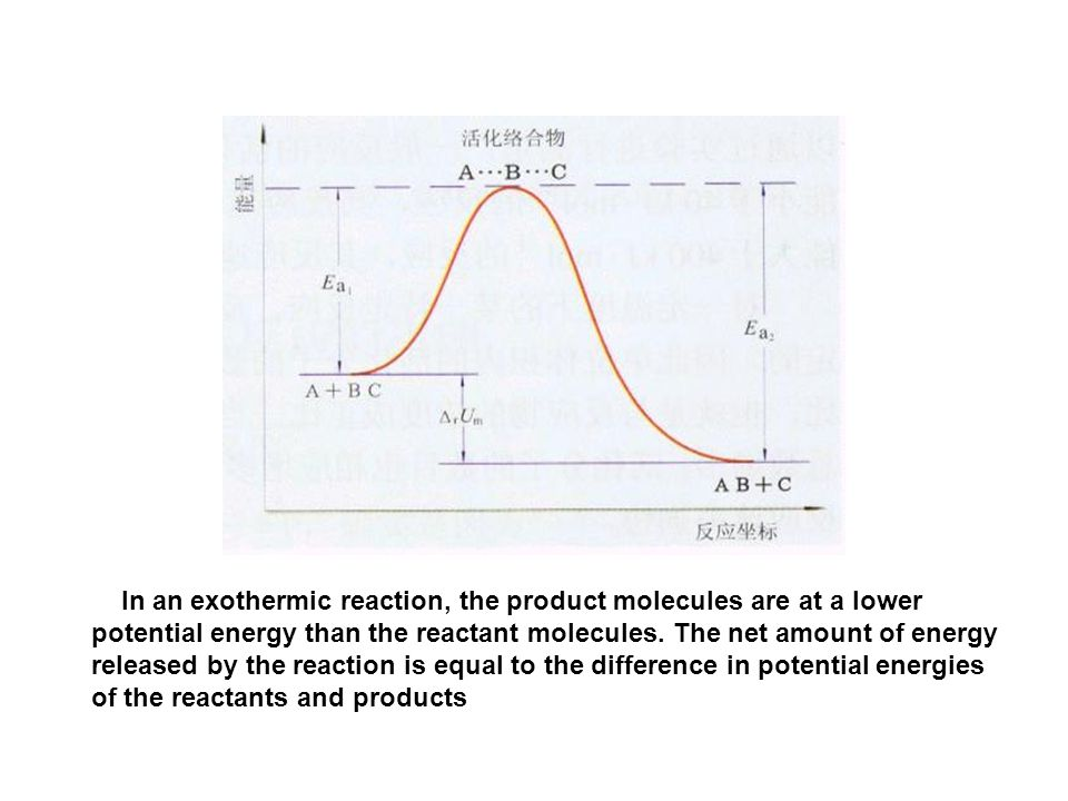 In an exothermic reaction, the product molecules are at a lower potential energy than the reactant molecules.