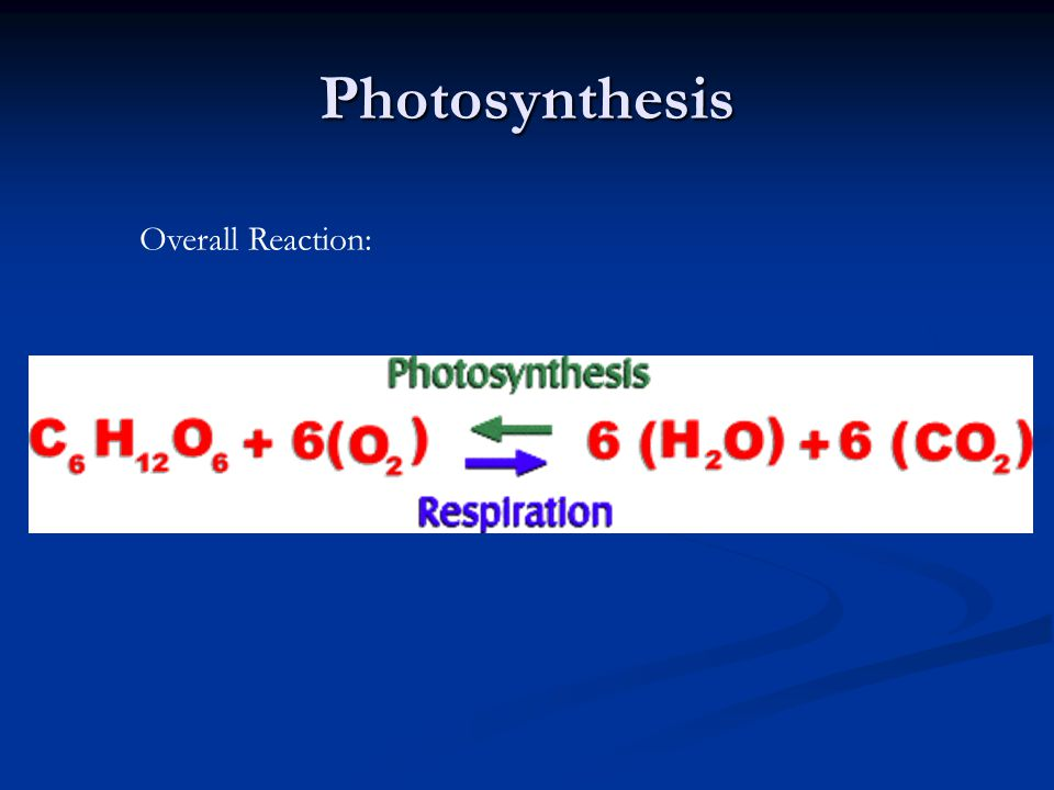 Photosynthesis Overall Reaction: