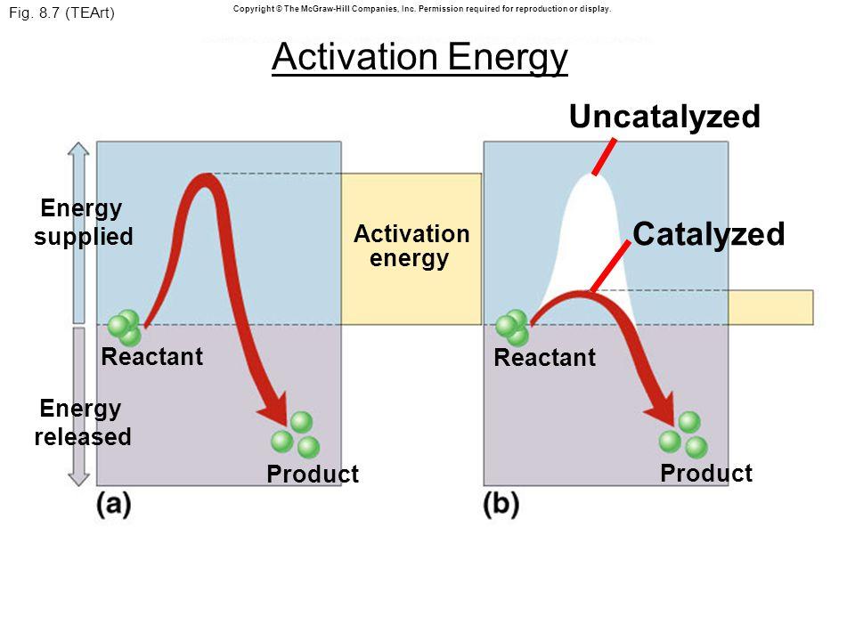 Fig. 8.7 (TEArt) Reactant Product Catalyzed Uncatalyzed Product Reactant Activation energy Energy supplied Energy released Copyright © The McGraw-Hill