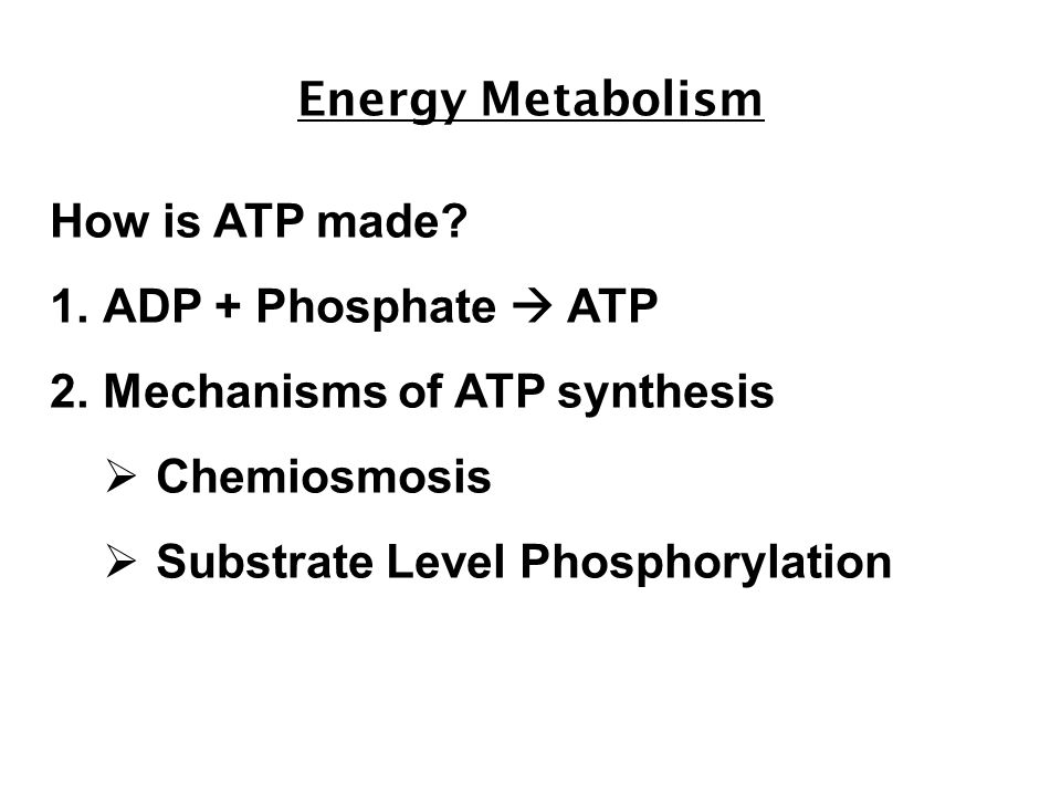 Energy Metabolism How is ATP made.
