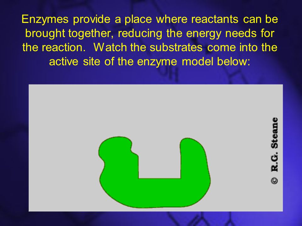 Enzymes provide a place where reactants can be brought together, reducing the energy needs for the reaction.