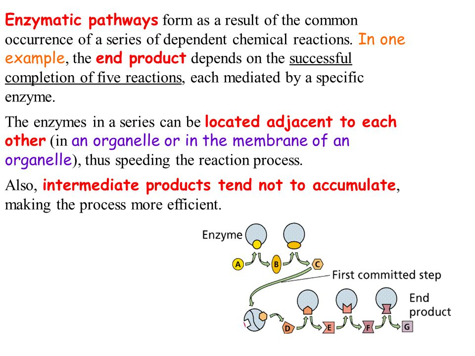 Enzymatic pathways form as a result of the common occurrence of a series of dependent chemical reactions. In one example, the end product depends on t