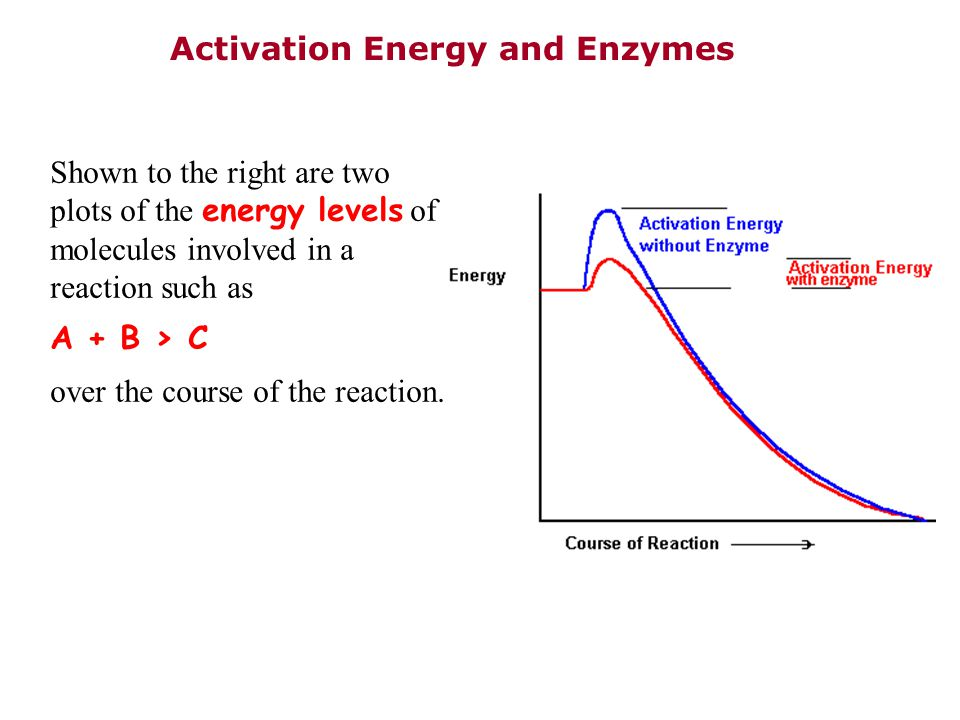Shown to the right are two plots of the energy levels of molecules involved in a reaction such as A + B > C over the course of the reaction. Activatio