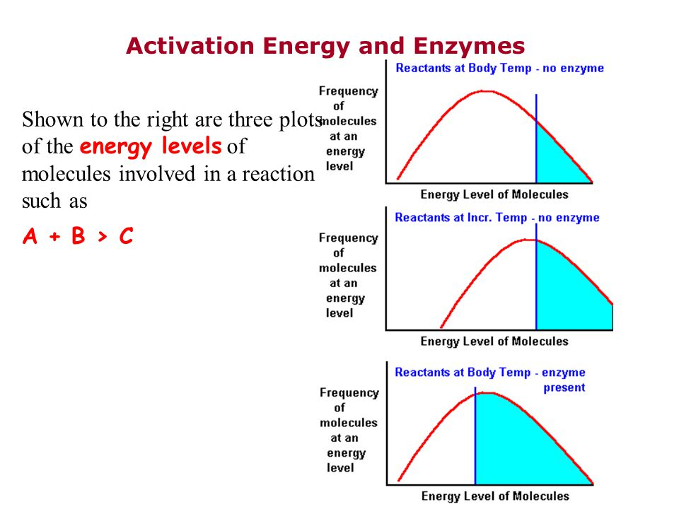 Activation Energy and Enzymes Shown to the right are three plots of the energy levels of molecules involved in a reaction such as A + B > C