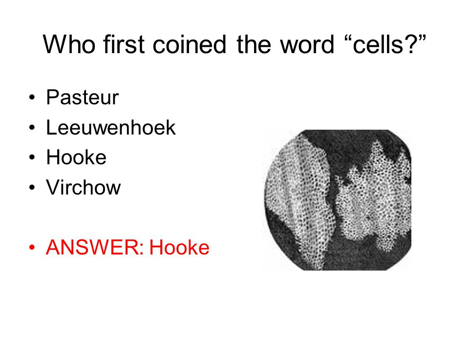 Who first coined the word cells Pasteur Leeuwenhoek Hooke Virchow ANSWER: Hooke