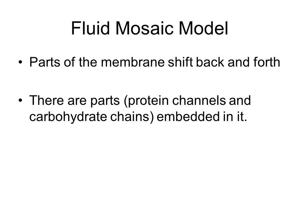 Fluid Mosaic Model Parts of the membrane shift back and forth There are parts (protein channels and carbohydrate chains) embedded in it.