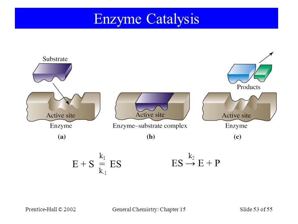 Prentice-Hall © 2002General Chemistry: Chapter 15Slide 53 of 55 Enzyme Catalysis E + S = ES k1k1 k -1 ES → E + P k2k2