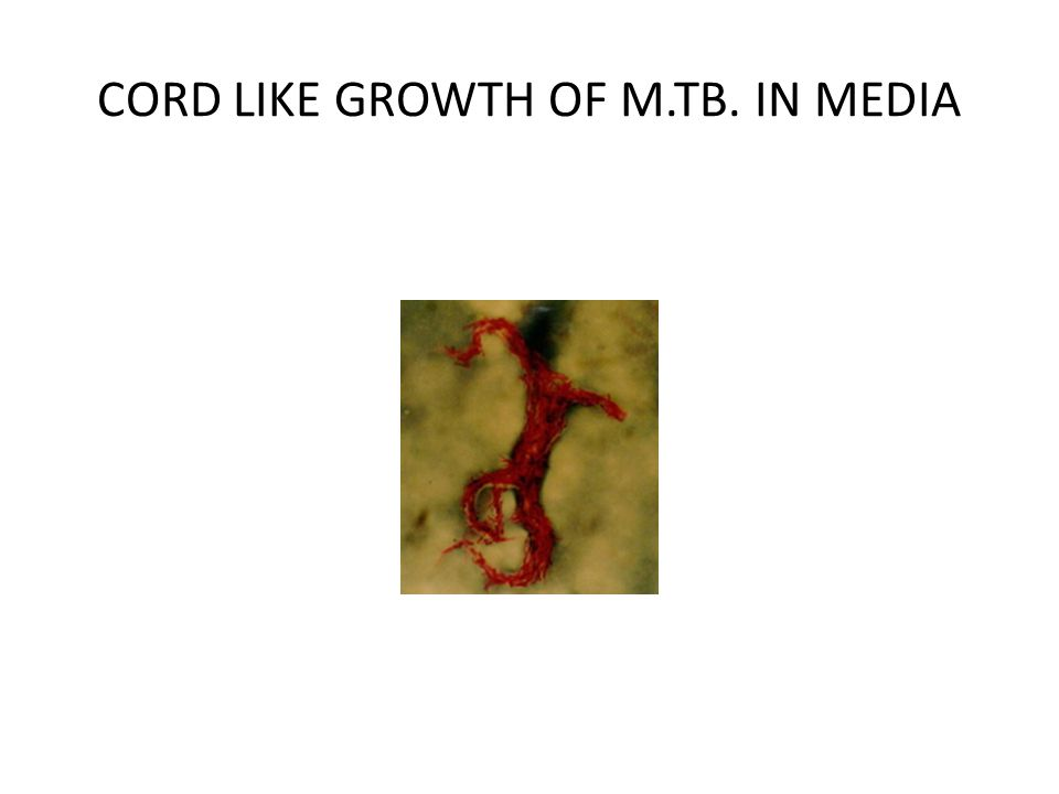 CORD LIKE GROWTH OF M.TB. IN MEDIA