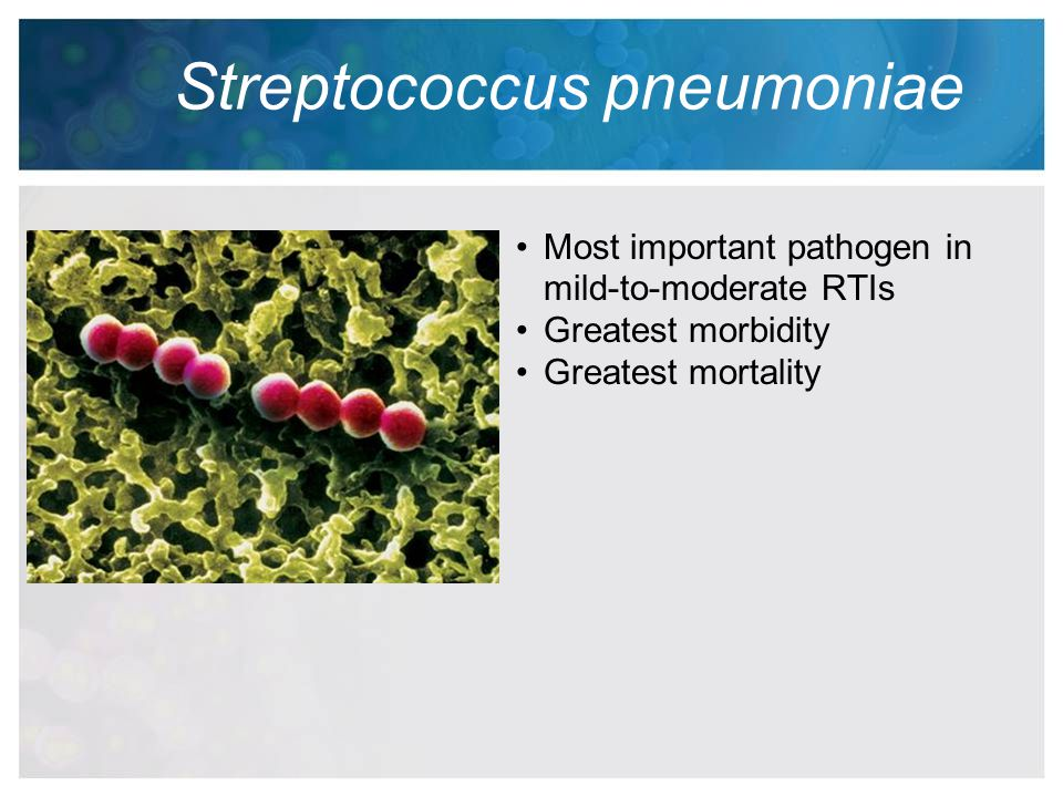 Streptococcus pneumoniae Most important pathogen in mild-to-moderate RTIs Greatest morbidity Greatest mortality
