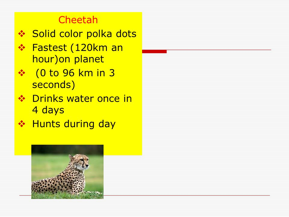 That's a Cheetah for sure!