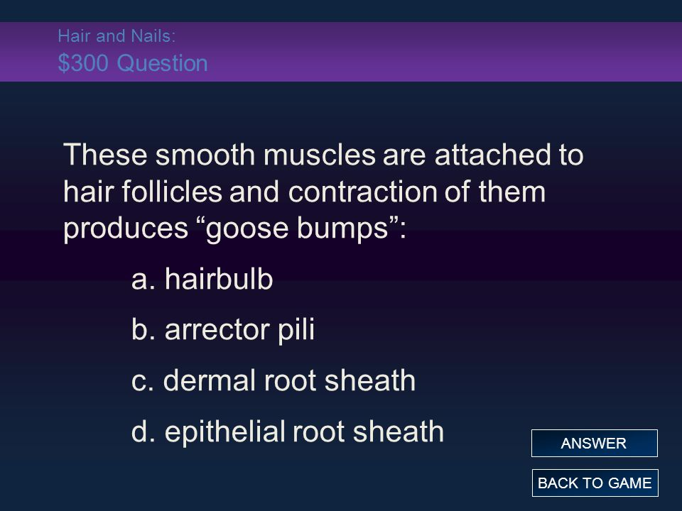 """Hair and Nails: $300 Question These smooth muscles are attached to hair follicles and contraction of them produces """"goose bumps"""": a. hairbulb b. arrec"""