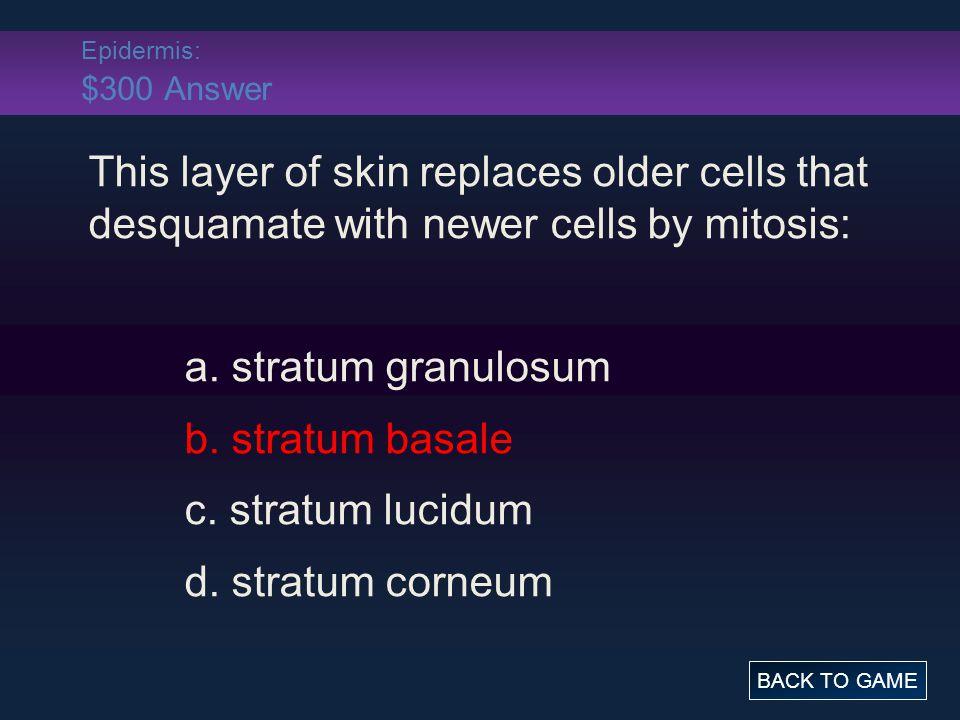 Epidermis: $400 Question Thin skin: a.lacks a stratum lucidum b.