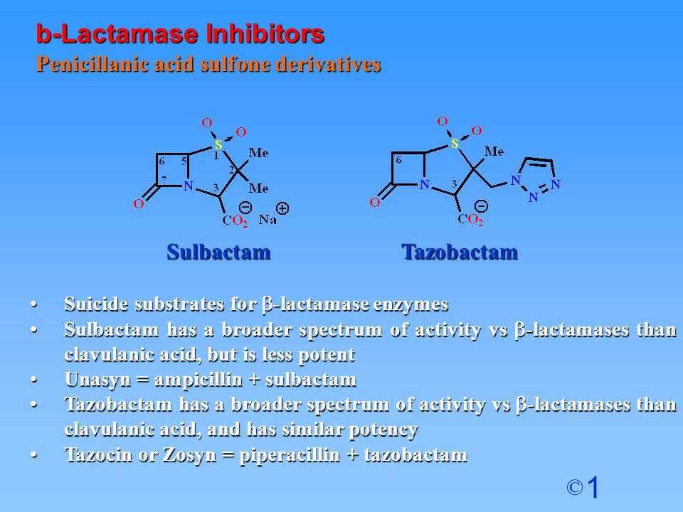 1 © Penicillanic acid sulfone derivatives Suicide substrates for  -lactamase enzymesSuicide substrates for  -lactamase enzymes Sulbactam has a broader spectrum of activity vs  -lactamases than clavulanic acid, but is less potentSulbactam has a broader spectrum of activity vs  -lactamases than clavulanic acid, but is less potent Unasyn = ampicillin + sulbactamUnasyn = ampicillin + sulbactam Tazobactam has a broader spectrum of activity vs  -lactamases than clavulanic acid, and has similar potencyTazobactam has a broader spectrum of activity vs  -lactamases than clavulanic acid, and has similar potency Tazocin or Zosyn = piperacillin + tazobactamTazocin or Zosyn = piperacillin + tazobactam b-Lactamase Inhibitors SulbactamTazobactam