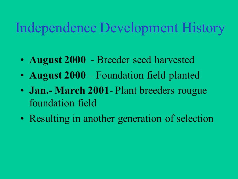 Independence Development History August 2000 - Breeder seed harvested August 2000 – Foundation field planted Jan.- March 2001- Plant breeders rougue foundation field Resulting in another generation of selection