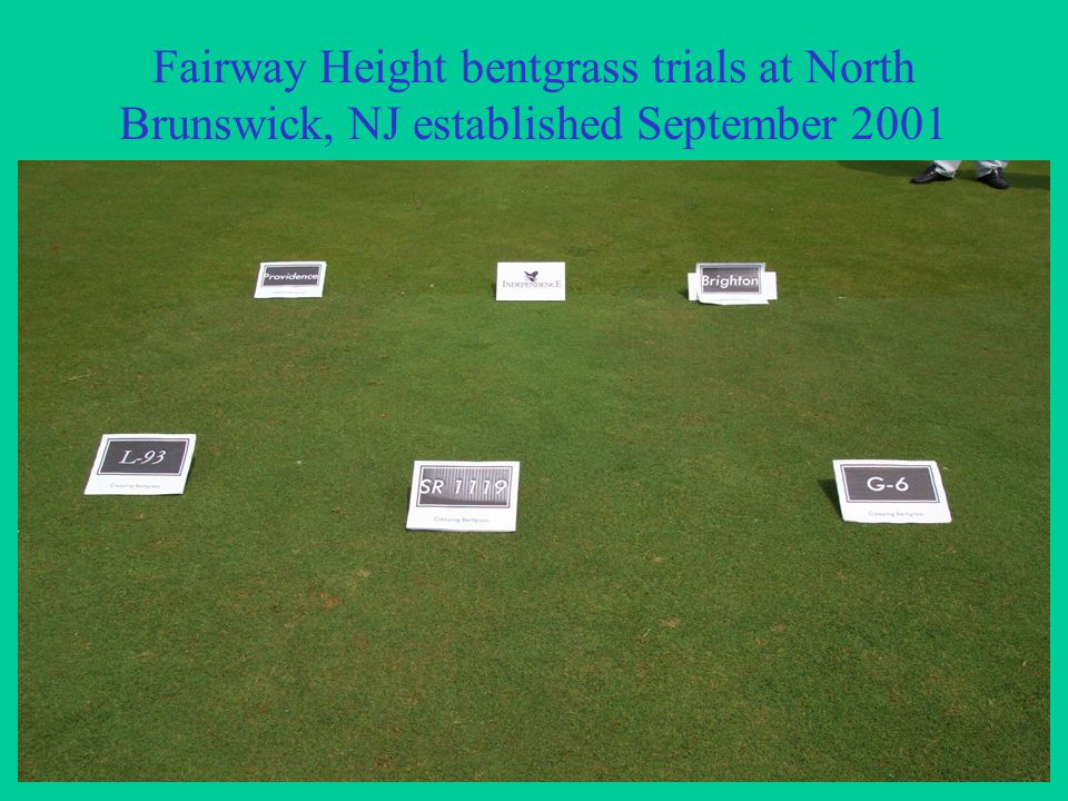 Fairway Height bentgrass trials at North Brunswick, NJ established September 2001
