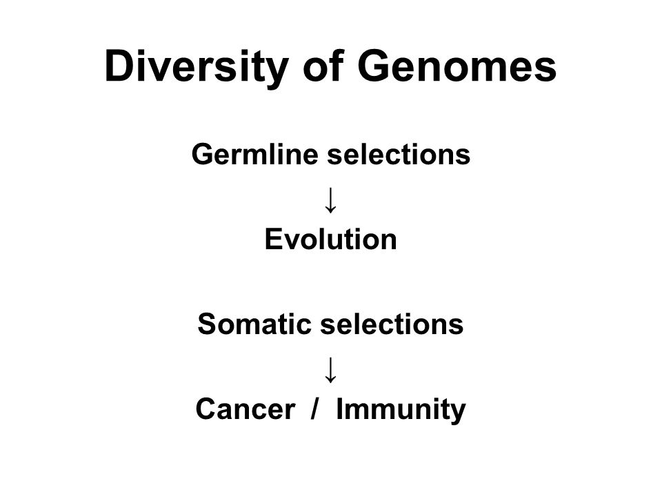 Diversity of Genomes Germline selections ↓ Evolution Somatic selections ↓ Cancer / Immunity