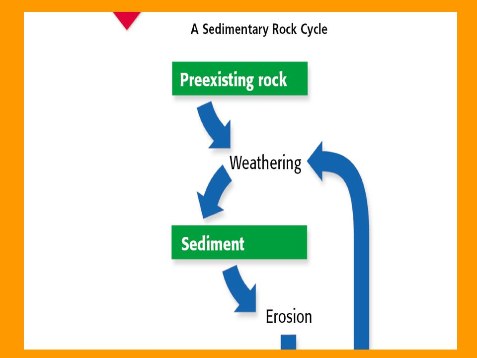 "CONNECT TO EARTH SCIENCE Using sedimentary layers as references points, scientists can find relative age of a fossil. Use ""A Sedimentary Rock Cycle"" t"