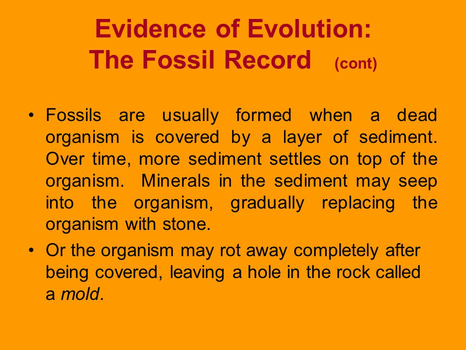Evidence of Evolution: The Fossil Record (cont) These layers are formed when sediments, particles of sand dust, or soil are carried by wind and water