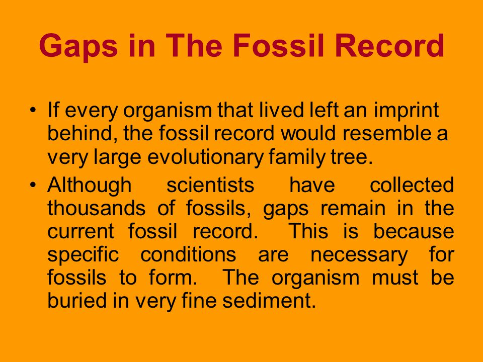 Reading the Fossil Record (cont) This similarity indicates that the fossilized organisms were close relatives of present- day organisms. The deeper in