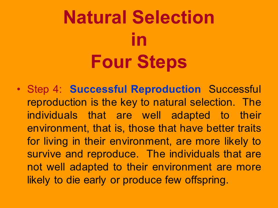 Natural Selection in Four Steps Step 3: Struggle to Survive A natural environment does not have enough food, water, and other resources to support all