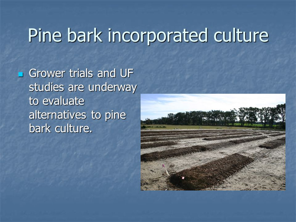 Pine bark incorporated culture Grower trials and UF studies are underway to evaluate alternatives to pine bark culture.