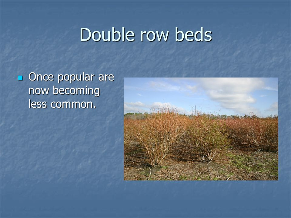 Double row beds Once popular are now becoming less common.
