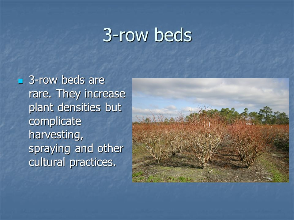 3-row beds 3-row beds are rare.