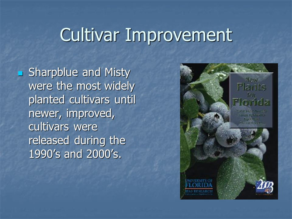Cultivar Improvement Sharpblue and Misty were the most widely planted cultivars until newer, improved, cultivars were released during the 1990's and 2000's.