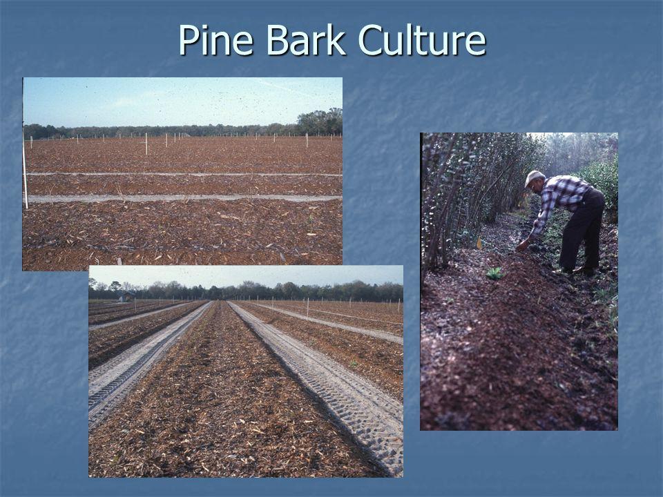 Pine Bark Culture