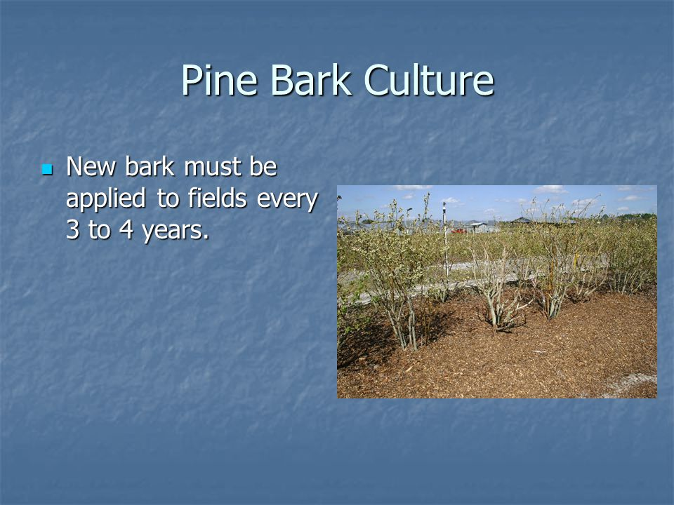 Pine Bark Culture New bark must be applied to fields every 3 to 4 years.