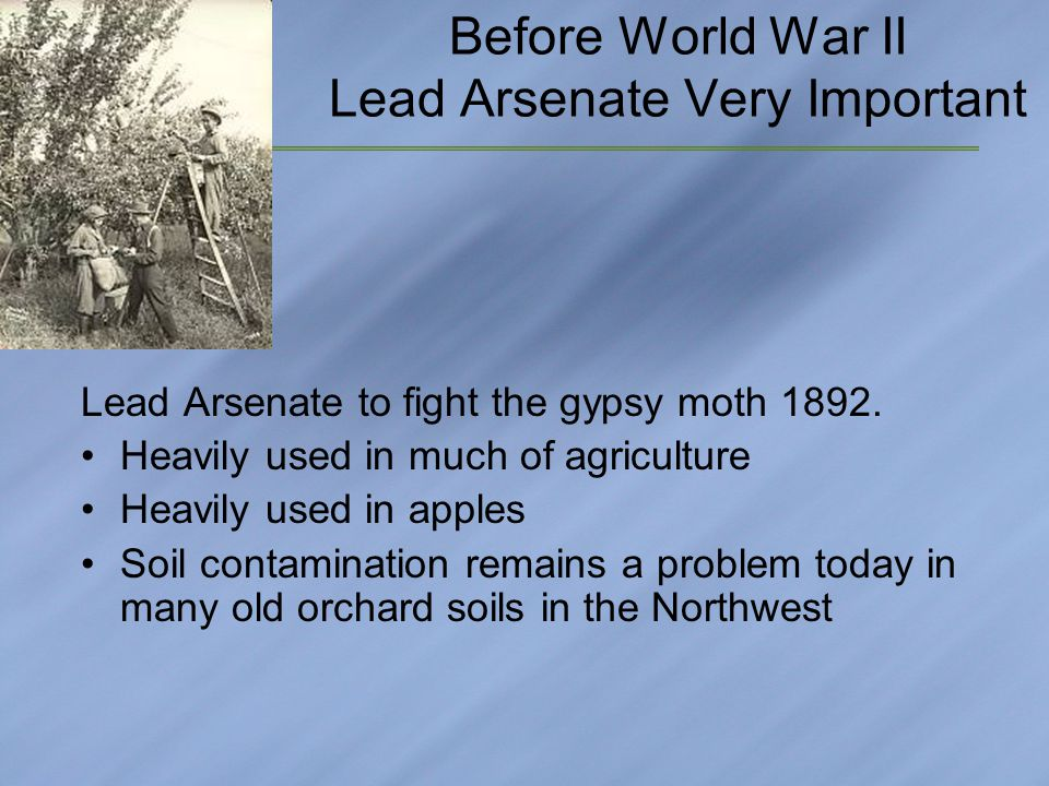 Before World War II Lead Arsenate Very Important Lead Arsenate to fight the gypsy moth 1892.