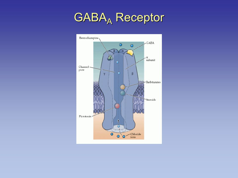 GABA A Receptor