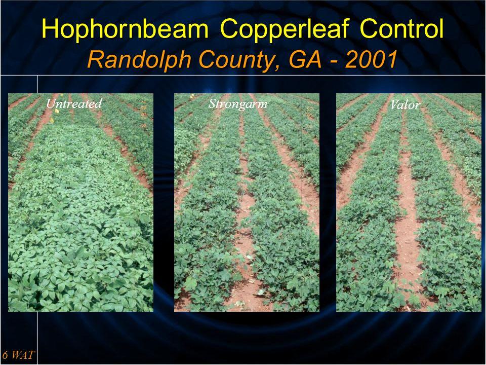Hophornbeam Copperleaf Control Randolph County, GA - 2001 6 WAT UntreatedStrongarm Valor