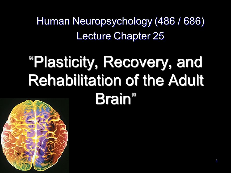 22 Plasticity, Recovery, and Rehabilitation of the Adult Brain Human Neuropsychology (486 / 686) Lecture Chapter 25.