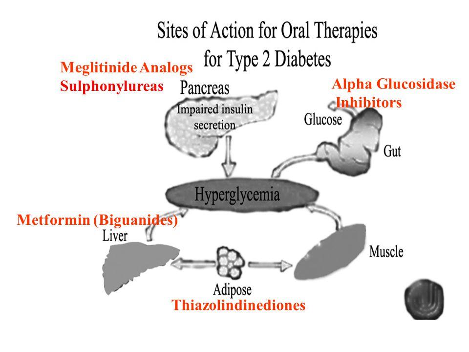 Meglitinide Analogs Sulphonylureas Thiazolindinediones Metformin (Biguanides) Alpha Glucosidase Inhibitors