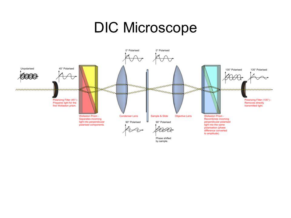DIC Microscope
