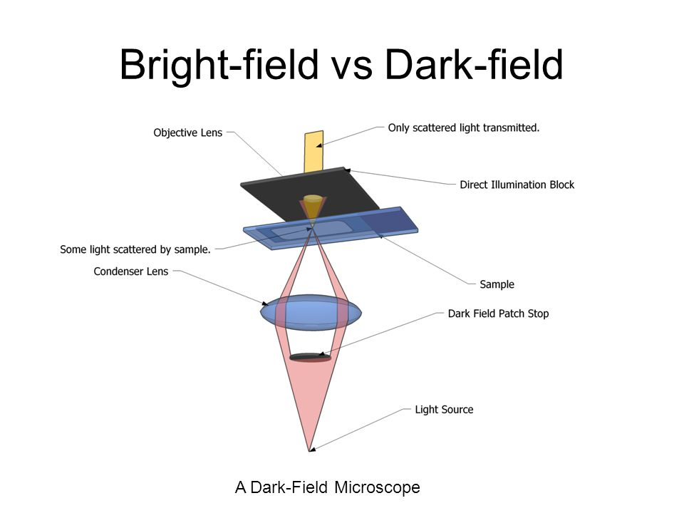 Bright-field vs Dark-field A Dark-Field Microscope