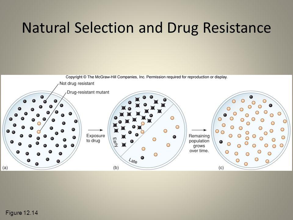 Natural Selection and Drug Resistance Figure 12.14