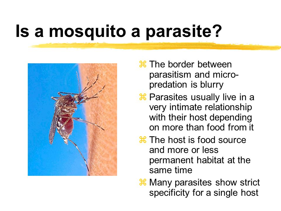 Is a mosquito a parasite.